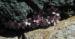 Zurück zum kompletten Bilderset Alpen-Mannsschild Blüte pink Androsace alpina