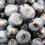 Blaubeeren Vaccinium myrtillus 02