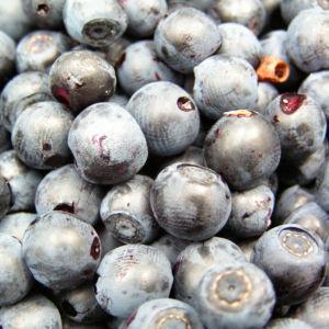 Blaubeeren Vaccinium myrtillus 05
