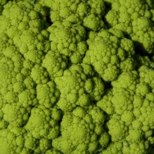 Blumenkohl Frucht gruen Brassica oleracea 26