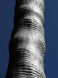 Bild: Drachenbaum Rinde silbern Dracaena draco