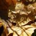 Zurück zum kompletten Bilderset Eichel braun Quercus
