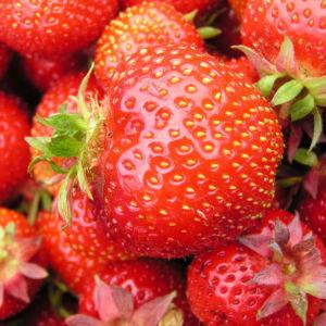 Erdbeere Frucht rot Fragaria 05