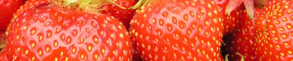 Anklicken um das ganze Bild zu sehen Garten-Erdbeere Frucht rot Fragaria x ananassa