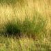 Zurück zum kompletten Bilderset Feld Beifuß Zweige grün Artemisia campestris