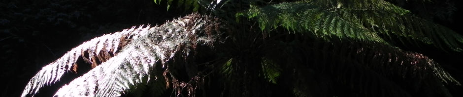 baumfarn-blatt-gruen-stamm-braun-dicksonia-antarctica