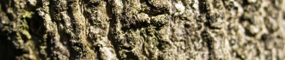 Anklicken um das ganze Bild zu sehen Gemeiner Schneeball Frucht Blatt rot Viburnum opulus