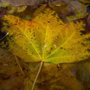 Herbst Laub Blaetter 01
