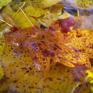 Herbst Laub Blaetter 02