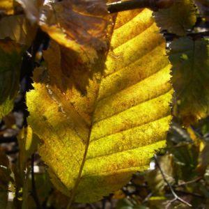 Herbst Laub Blaetter 05