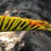 Zurück zum kompletten Bilderset Hirschzunge Farn Blatt grün - Asplenium scolopendrium