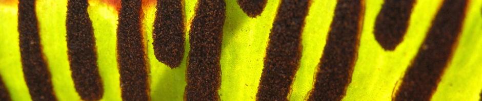 Anklicken um das ganze Bild zu sehen zufällige Pflanzenbilder