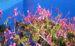 Zurück zum kompletten Bilderset Kapland Pelargonie Blüte pink Pelargonium reniforme