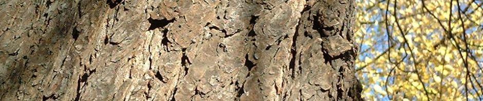 kastanie-gemeine-ross-aesculus-hippocastanum