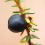 Kraehenbeere Frucht schwarz Empetrum nigrum 01