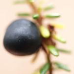 Kraehenbeere Frucht schwarz Empetrum nigrum 03