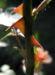 Zurück zum kompletten Bilderset Kulturrose Blüte orange Rosa rosa