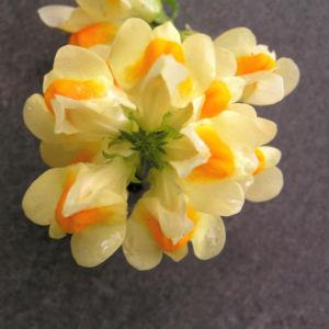 Leinkraut Frauenflachs Blute gelb hellgelb Linaria vulgaris 05