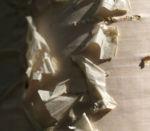 Moor Birke Baum Rinde weiss Betula pubescens 03