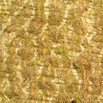 Rotbuche Baum Bucheckern Rinde Blatt Fagus sylvatica 07