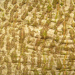 Bild: Rotbuche Baum Bucheckern Rinde grau Blatt grün Fagus sylvatica