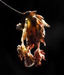 Rotbuche Bluete rot braun Fagus sylvatica 02