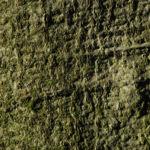 Bild:  Rotbuche Blatt rot braun Blüte Fagus sylvatica