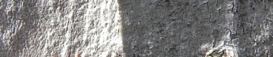 rote-samtmilbe-trombidium-holosericeum