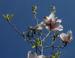 Zurück zum kompletten Bilderset Tulpen-Magnolie Blüte weiß rose Magnolia × soulangeana