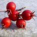 Zurück zum kompletten Bilderset Grüner Weissdorn rote Früchte Crataegus viridis